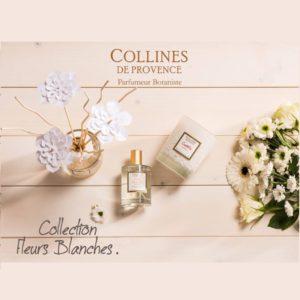 Fleurs Blanches - Collines de Provence
